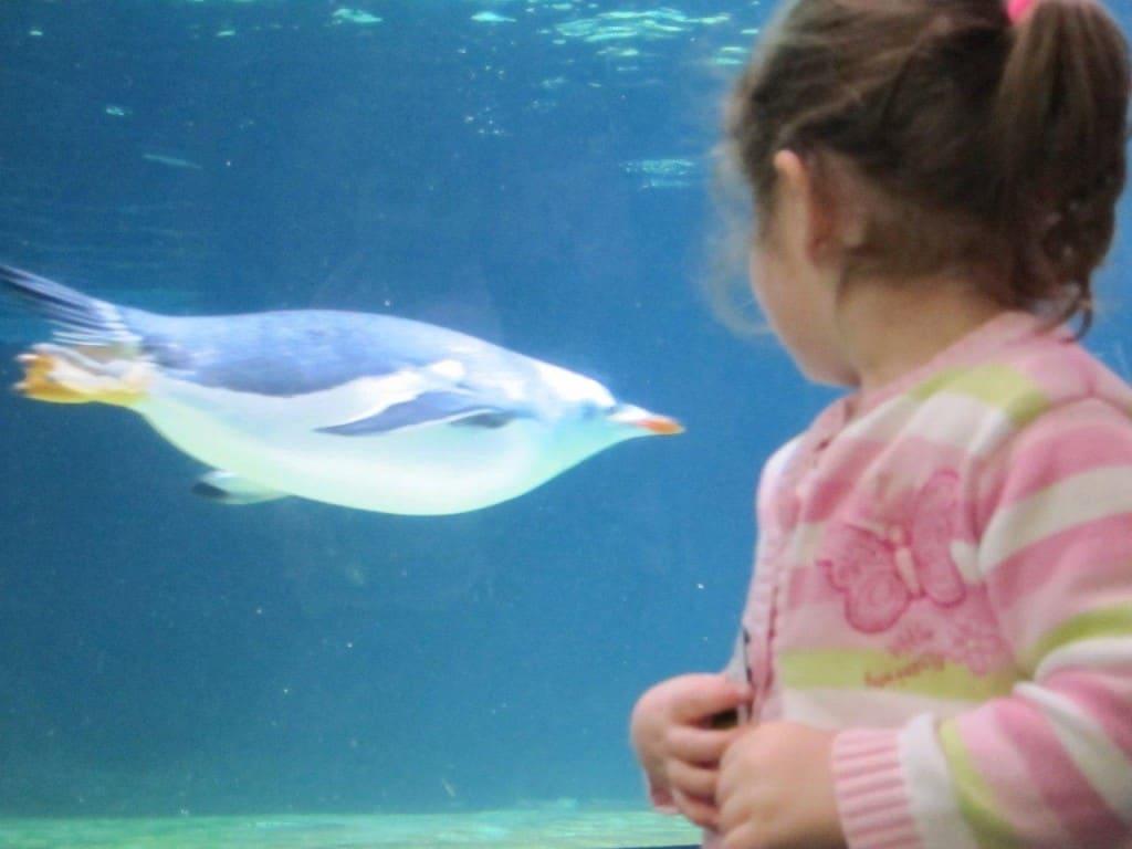 Aquarium penguin swim