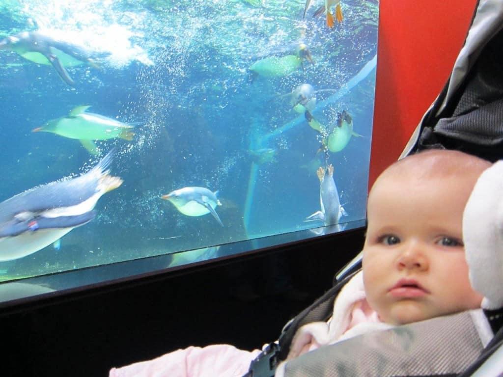 Melbourne Aquarium penguin swim