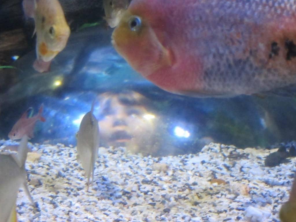 Melbourne Aquarium kids
