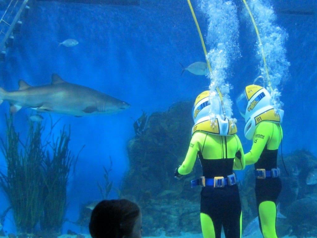 Melbourne Aquarium People