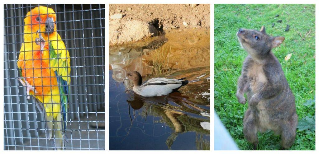 Wing's Wildlife Park, Gunns Plains, North West, Tasmania, animals