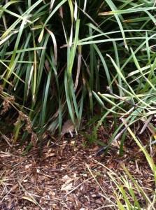 Melbourne Zoo rat