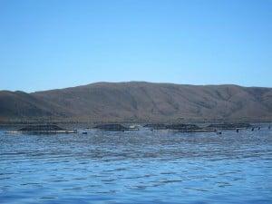 Gordon River Cruises, Salmon Farms, Strahan,